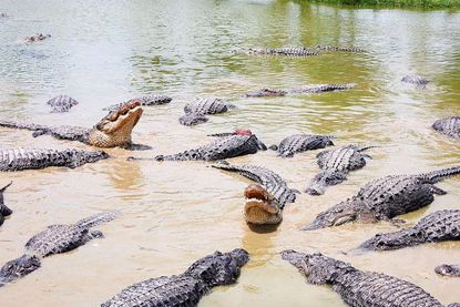 Picture of Everglades Full Day Tour