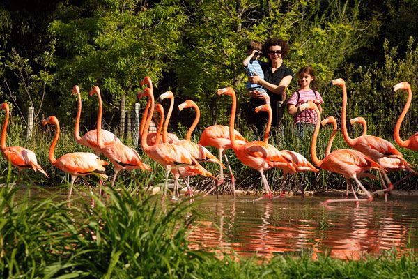 Visit the Caribbean Flamingos