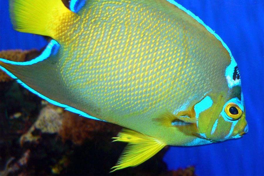 St Augustine Aquarium