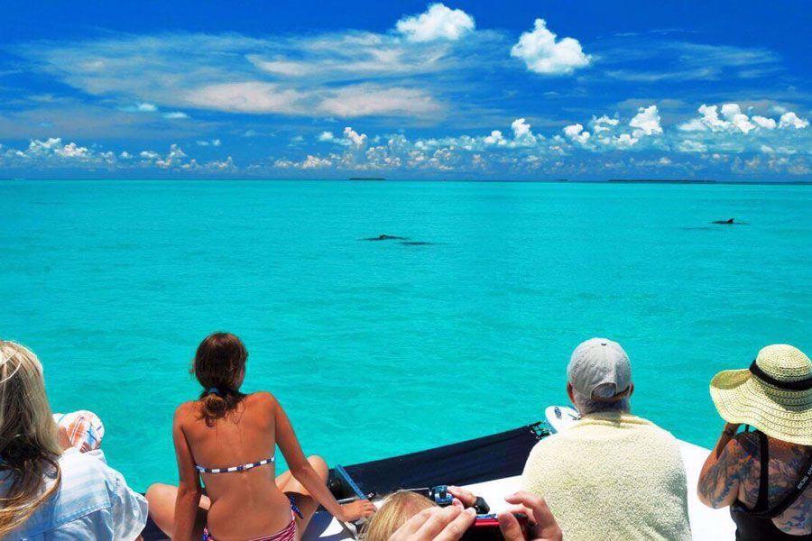 Observe bottlenose dolphins