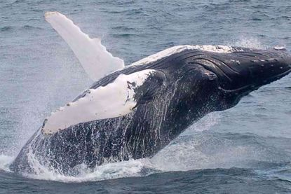 New England Aquarium Whale Watching Cruise