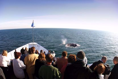 San Diego Whale Watching aboard Hornblower Cruises