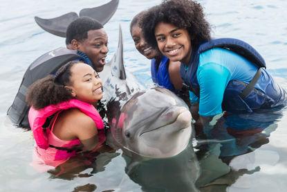 Marineland Dolphin Swim Adventure